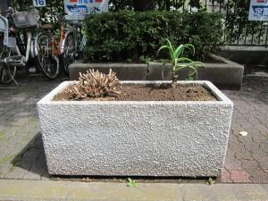 歩道の上に植えられた植物